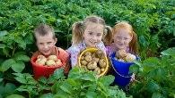 Willows Farm Village – the Potato Shindig, Hertfordshire