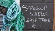 Rye Bay Scallop Week: 25th February – 4th March 2012