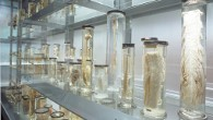 The Crystal Gallery at the Hunterian Museum (Photo: Hunterian Museum)