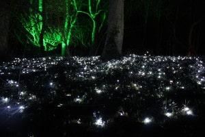 Snowdrops by Starlight - Cambo Estate