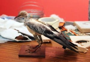 Museums at Night- Under the Skin Taxidermy Late - Grant Museum of Zoology - Photo: Jazmine Miles Long