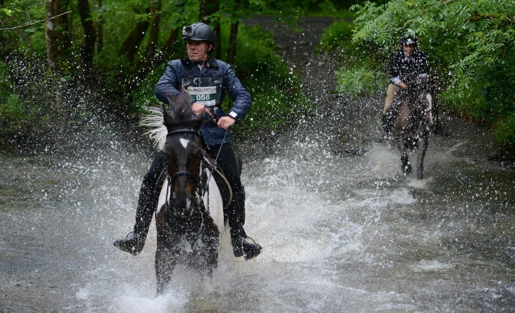Whole Earth Man v Horse 2016