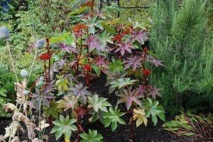 Alnwick Garden - Poison Garden - Photo: Margaret Whittaker