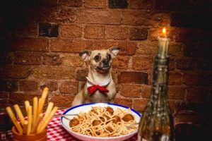 Lady and The Tramp Dog Friendly Valentines Screening at The Book Club