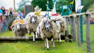 Willows Activity Farm sheep racing at Spring Special