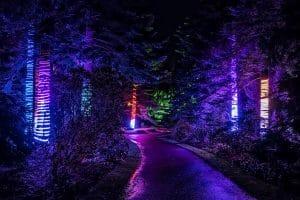 Christmas at the Botanics 2017 - Edinburgh - Choir of Trees