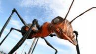 IF MK 2018, Sarruga, Insectes
