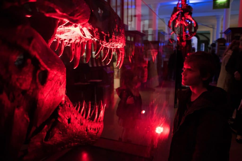 Twilight at the Museums - Cambridge - Sedgwick Museum of Earth Sciences