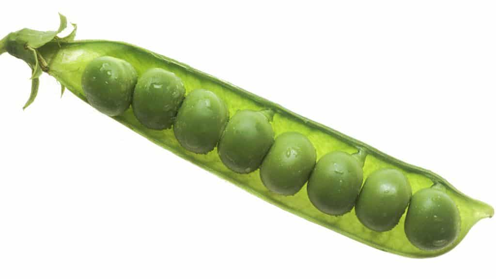 World Pea Throwing Championships 2019 - Lewes