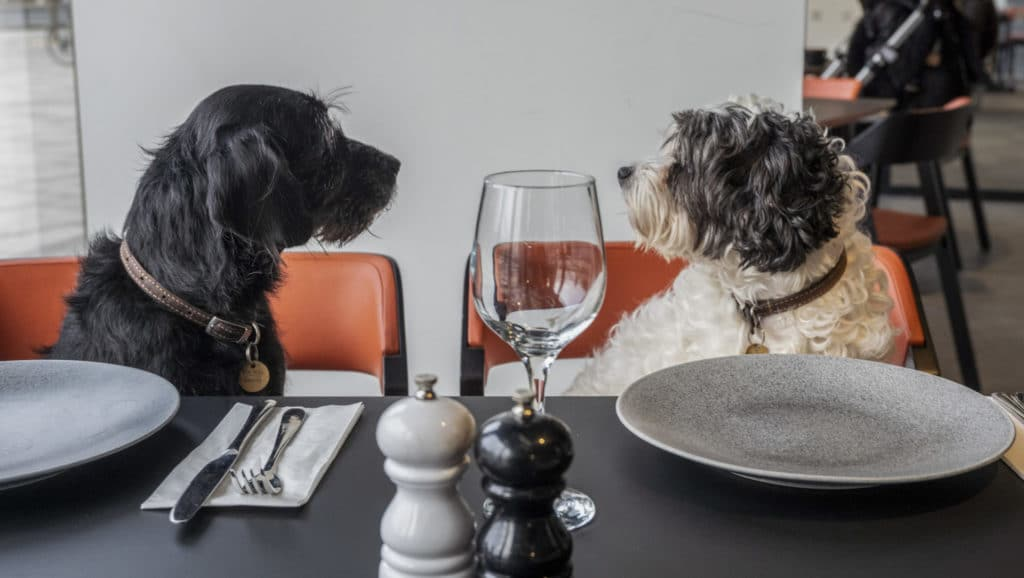 Dogs welcome at Riverside Studios as iconic venue reopens to public - credit Jeff Moore