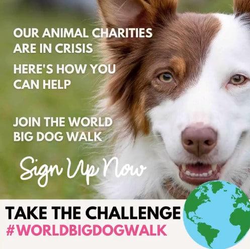 Big Dog Walk - World Big Dog Walk 2020