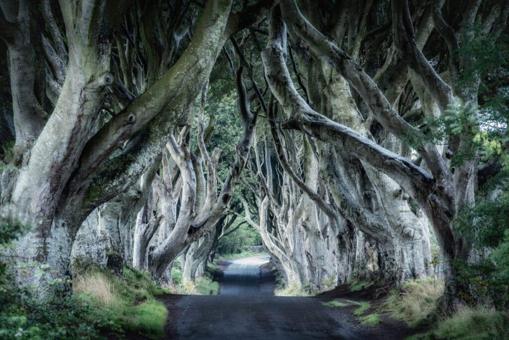 The Dark Hedges by Trevor Cole on Unsplash