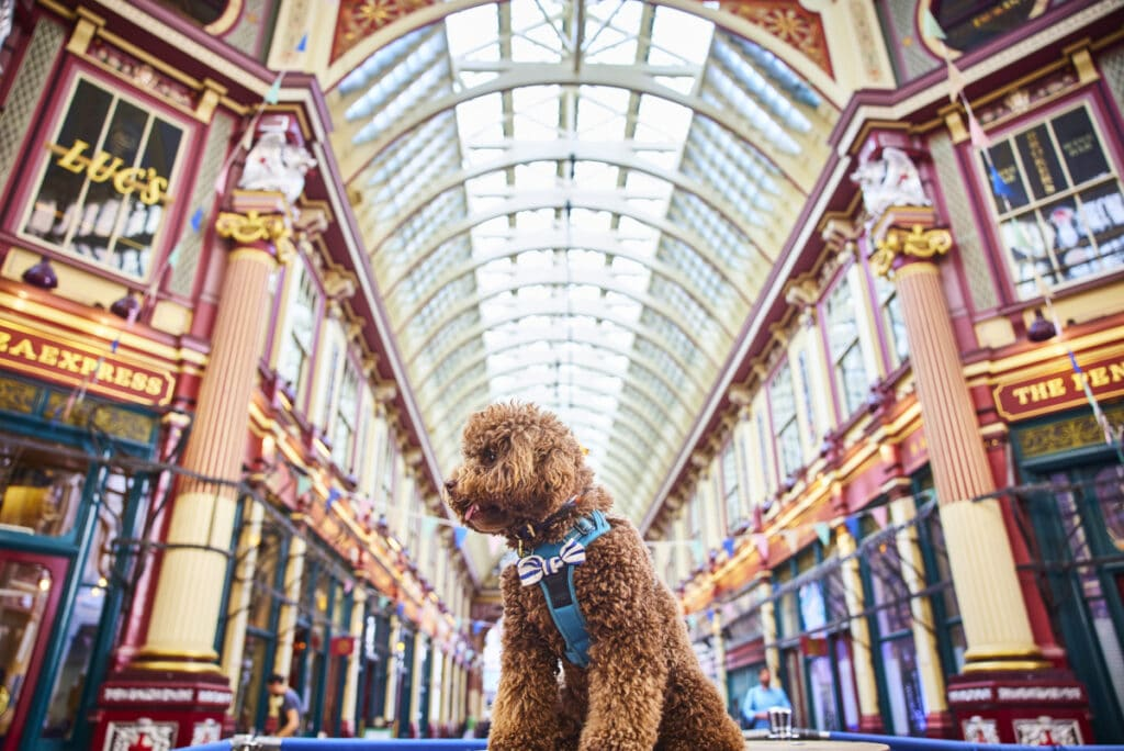 Digby the dog at Leadenhall Market